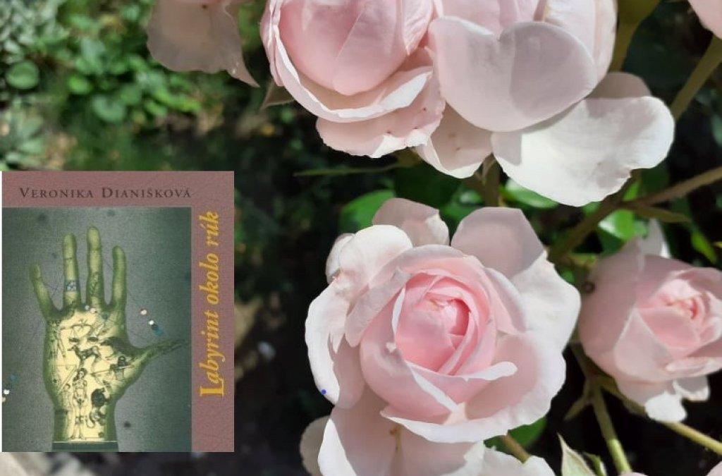 Pomalé rozpínanie ruže